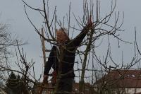 Baumschnittkurs_11