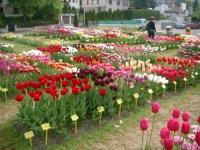 Familienausflug nach Gönningen ins Samenmuseum und zum Tulpenfriedhof