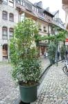 Freiburg_8